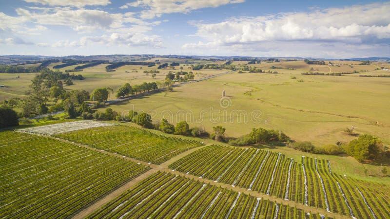Vignoble et terres cultivables scéniques, Australie images stock