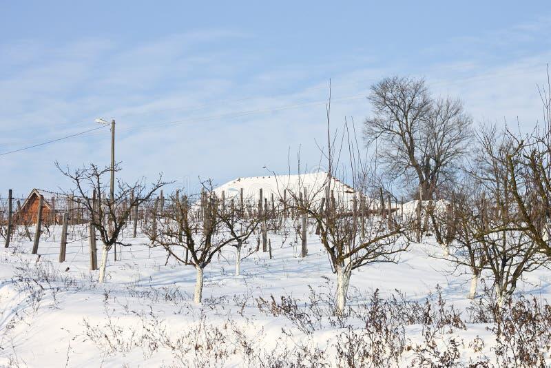 Vignoble et verger dans la neige photos stock