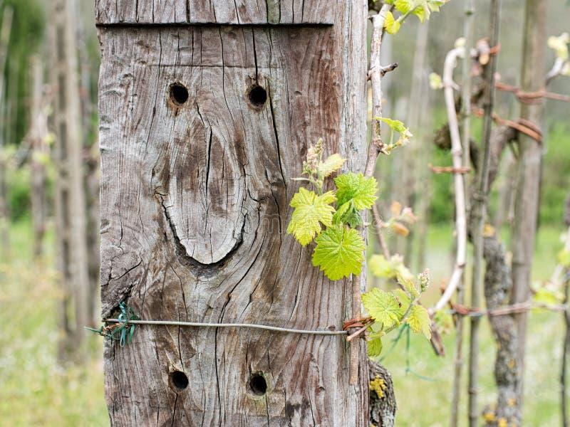 Vignoble heureux Le vieux dormeur semble porter un sourire photo libre de droits