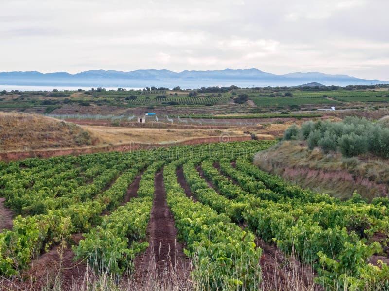Vignoble - Poyo de Roldan photos stock