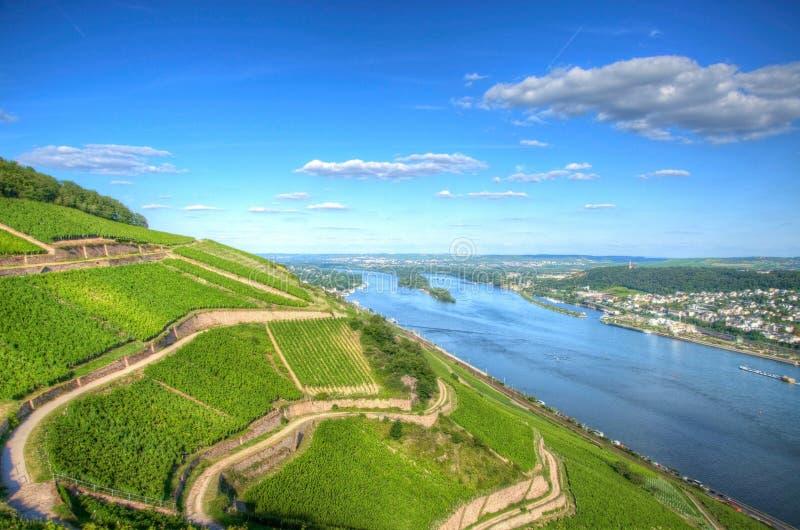 Vignoble près de Burg Ehrenfels, Ruedelsheim, Hesse, Allemagne photo stock