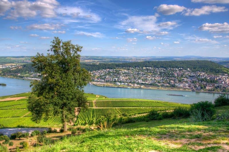 Vignoble près de Burg Ehrenfels, Ruedelsheim, Hesse, Allemagne image stock
