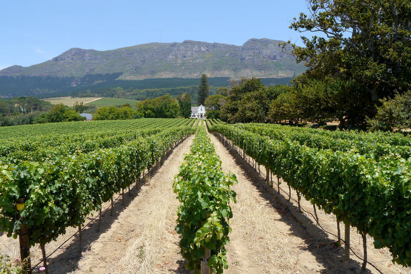 Vignoble près de Capetown photos stock