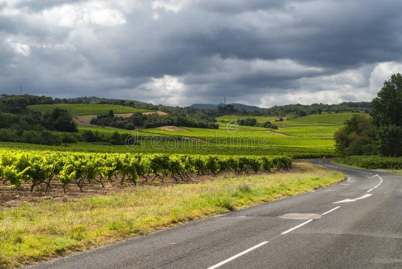 Vignoble près de Carcassonne (Frances) photographie stock libre de droits
