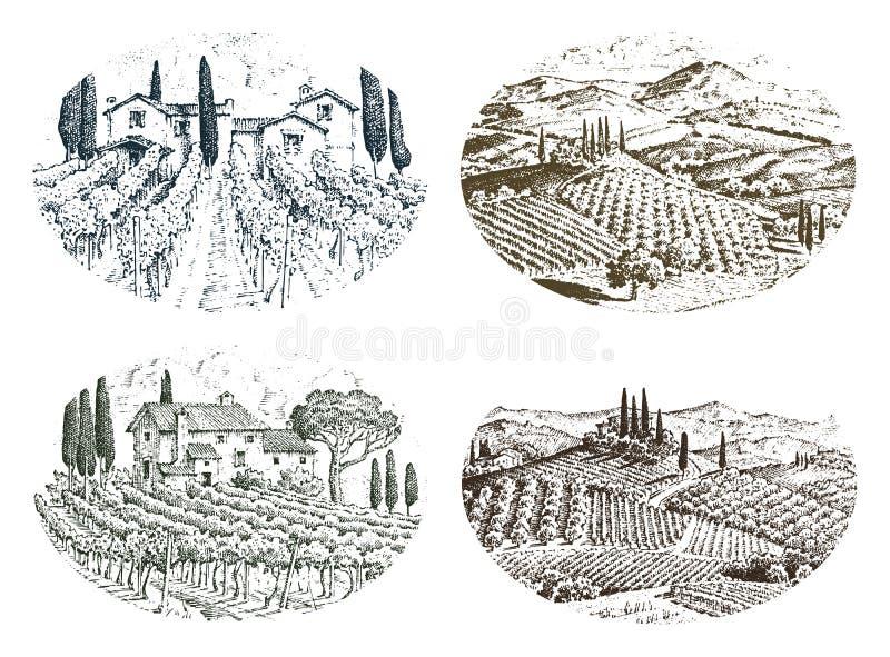 Vignoble rustique Horizontal rural avec des maisons fond solaire de la Toscane champs et arbres de cyprès moisson et illustration de vecteur