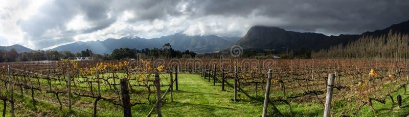 Vignoble sud-africain photo stock