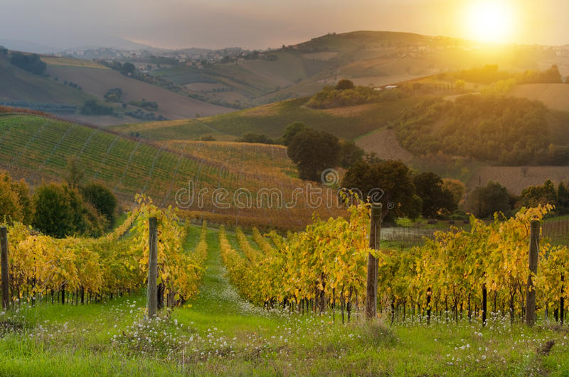 Download Vignoble Sur Le Coucher Du Soleil Image stock - Image du horizontal, ferme: 77157153