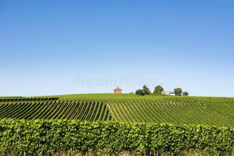 Vignoble sur le Lac de Constance photo libre de droits