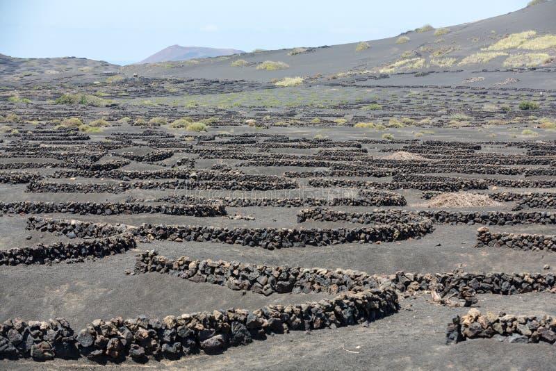 Vignoble sur le sol volcanique noir dans la région de Geria de La Lanzarote photo libre de droits
