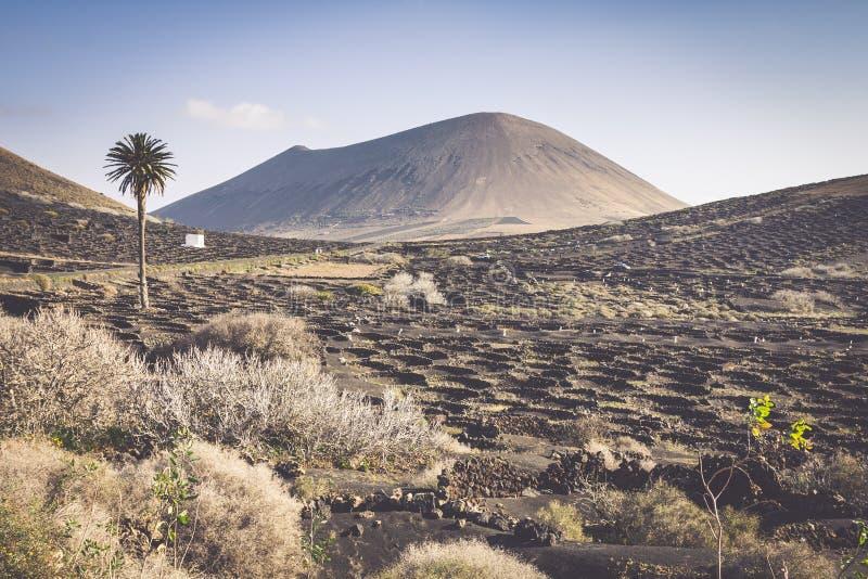 Vignoble sur le sol volcanique noir dans la région de Geria de La Lanzarote Cana photo libre de droits