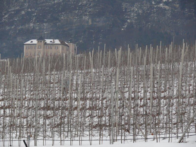 Vignoble sur les collines de Trentino photographie stock libre de droits