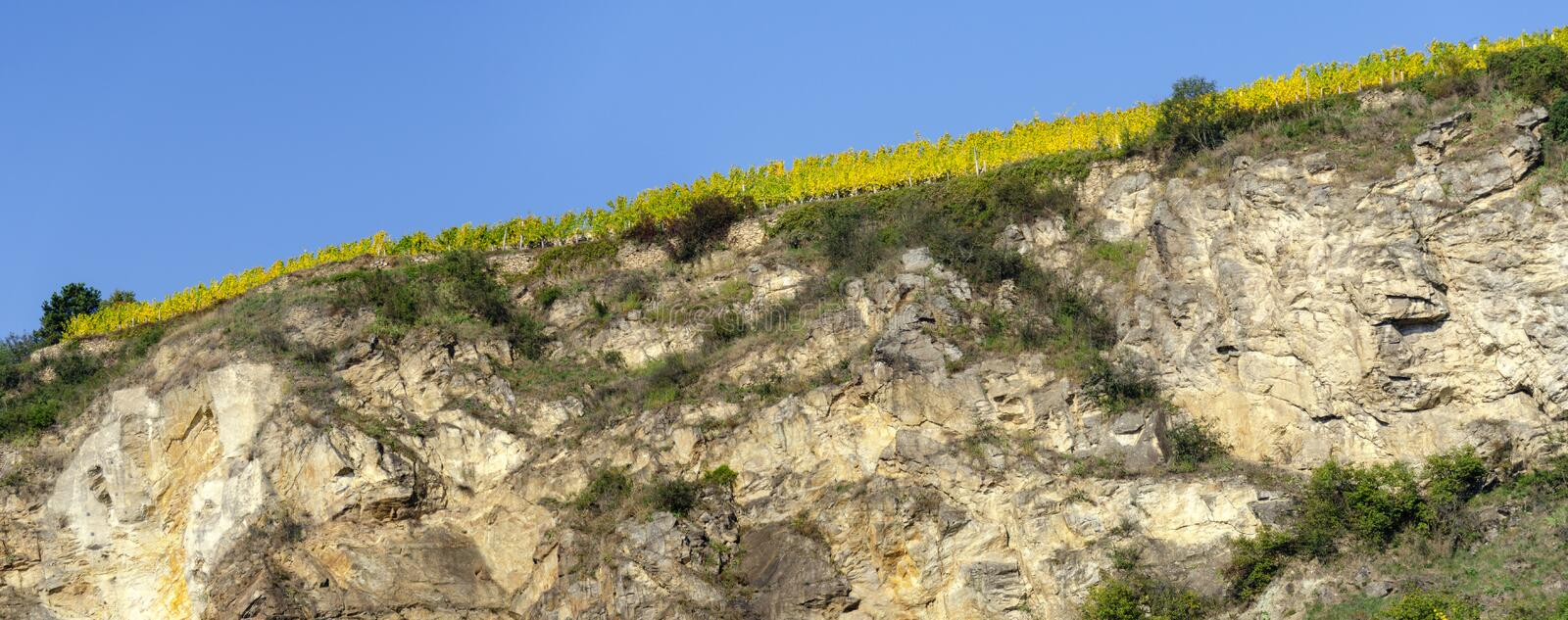 Vignoble sur une colline de loess photo libre de droits