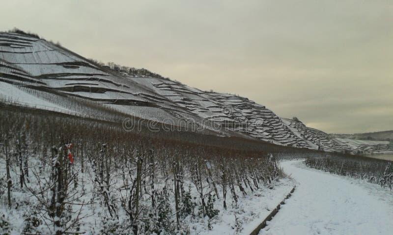 Vignoble-terrasses avec la neige photographie stock