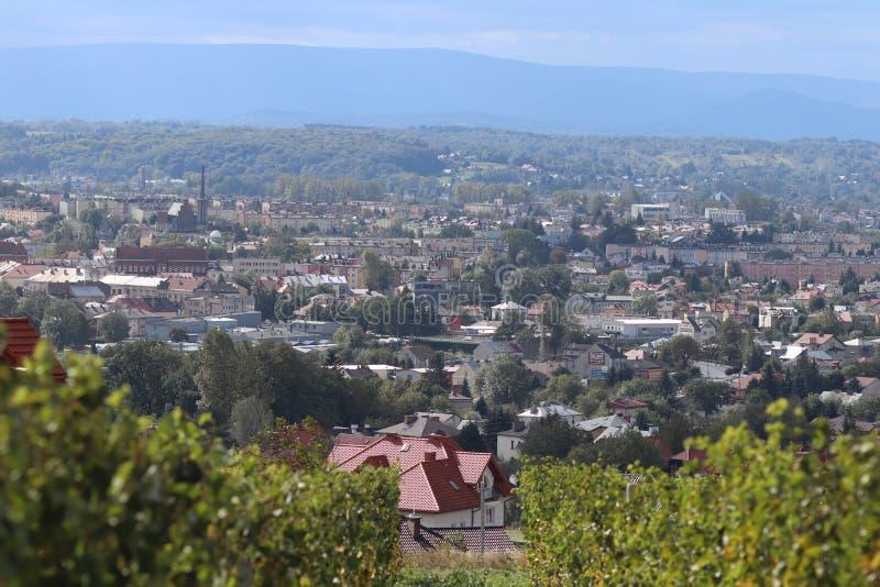 Vignoble vert avec une ville à l'arrière-plan Vinification dans une zone tempérée Ménages et terre de ferme Production d'alcool à images libres de droits