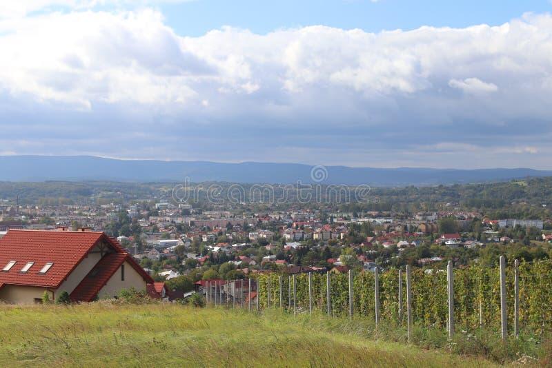 Vignoble vert avec une ville à l'arrière-plan Vinification dans une zone tempérée Ménages et terre de ferme Production d'alcool à photo stock