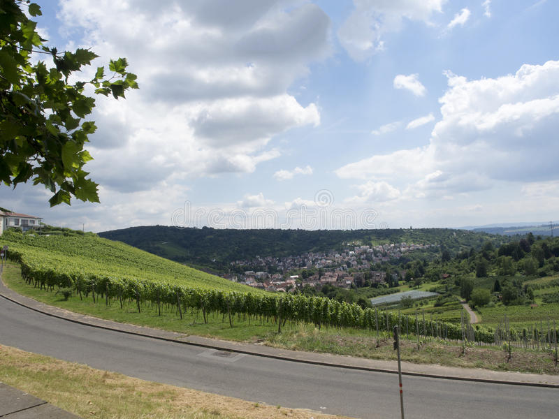 Vignobles à Stuttgart photographie stock libre de droits
