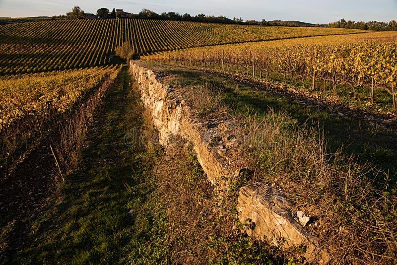 Vignobles automne, soleil du ` s de chianti photo libre de droits