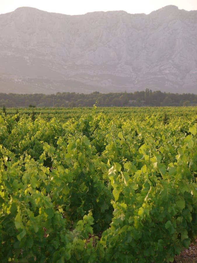 Vignobles avec la montagne comme fond image libre de droits