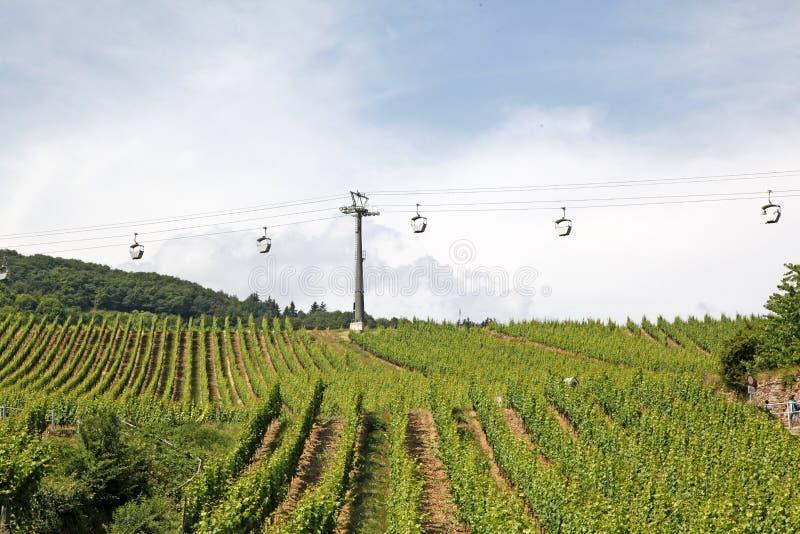 Vignobles, Bernkastel-Kues, Allemagne images libres de droits