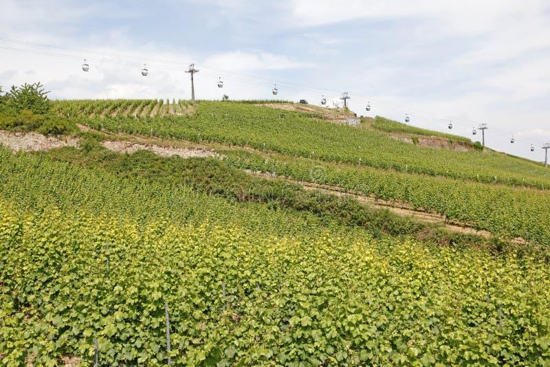 Vignobles, Bernkastel-Kues, Allemagne photographie stock libre de droits