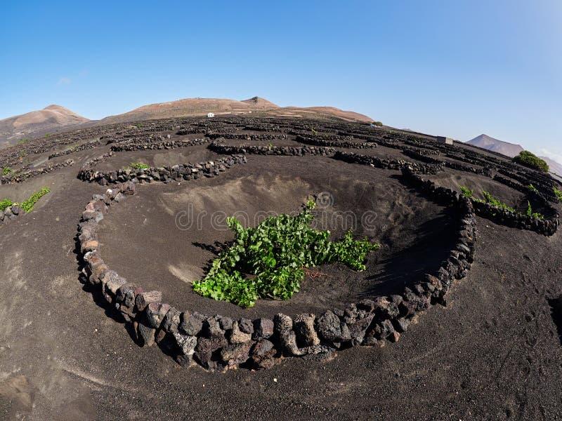 Vignobles célèbres de La Geria sur l'île volcanique de Lanzarote de sol, Espagne photos stock