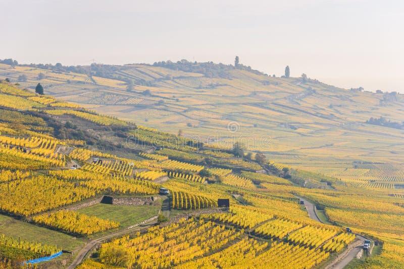 Vignobles chez Chateau de Kaysersberg - Alsace en France - destination de voyage en Europe images libres de droits