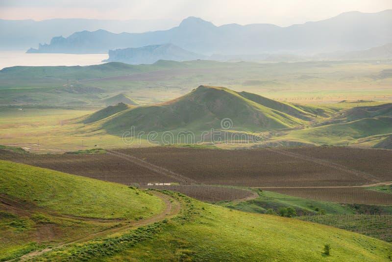 Vignobles criméens photo libre de droits
