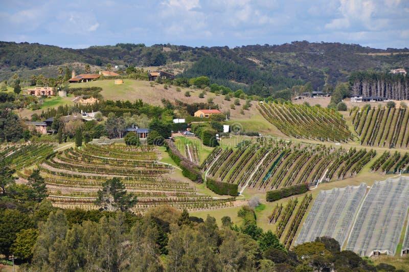 Vignobles d'île de Waiheke photos libres de droits
