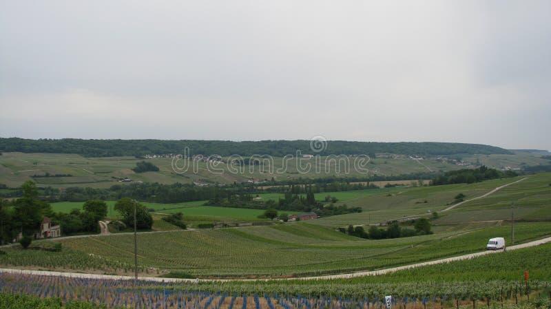 Vignobles d'Eperna photos stock
