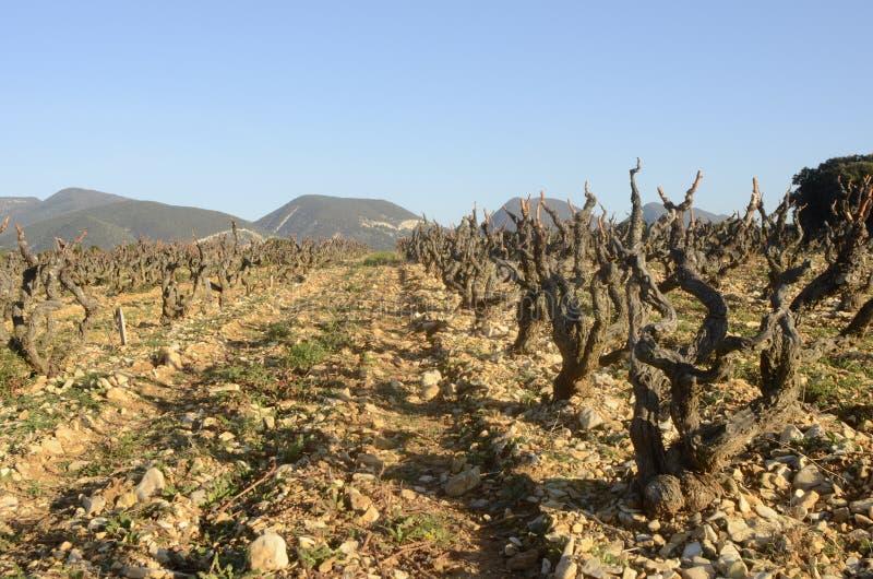 Vignobles dans Drome provencal dans les Frances image stock