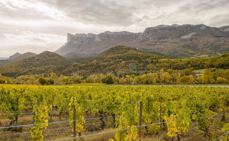 Vignobles dans la campagne française, Drome, Clairette de Die photographie stock