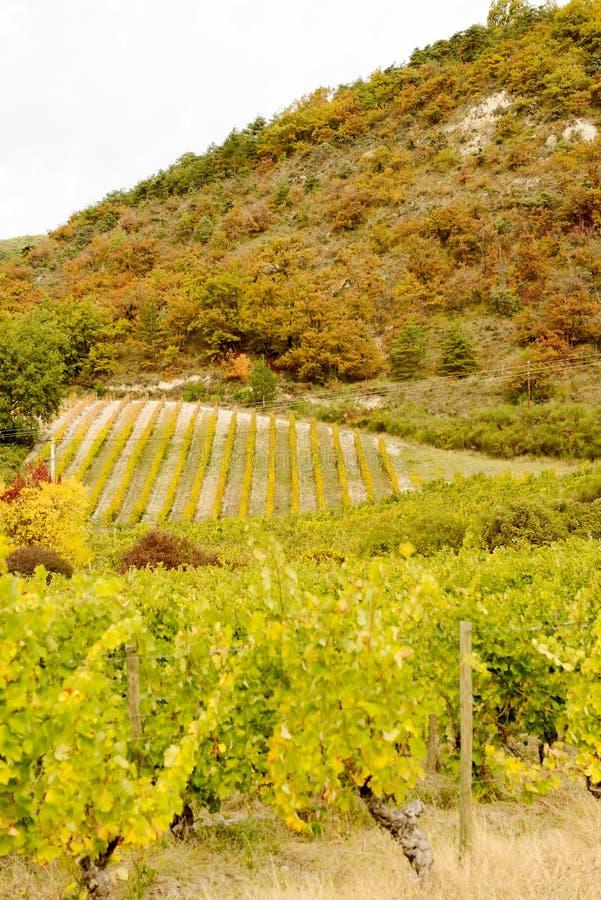 Vignobles dans la campagne française, Drome, Clairette de Die image libre de droits