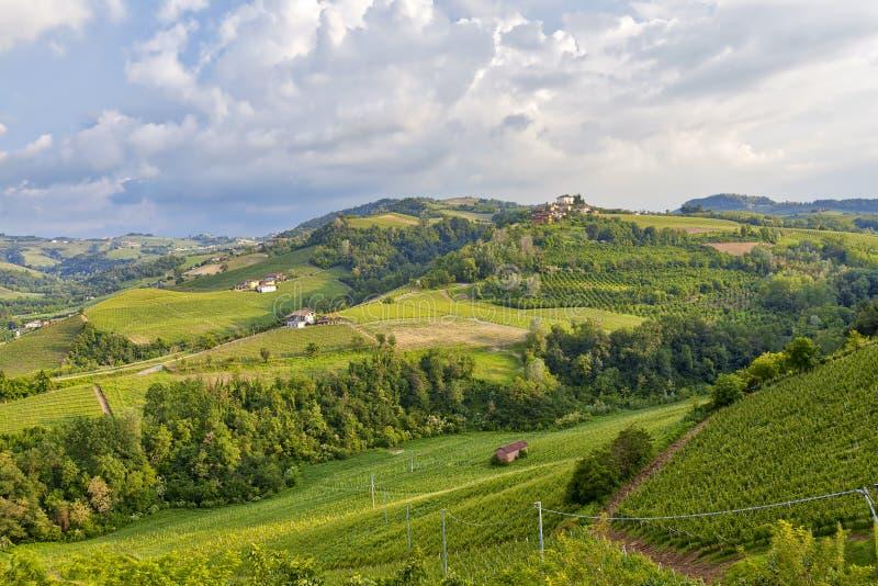 Vignobles dans la région de Langhe Image de couleur photo libre de droits