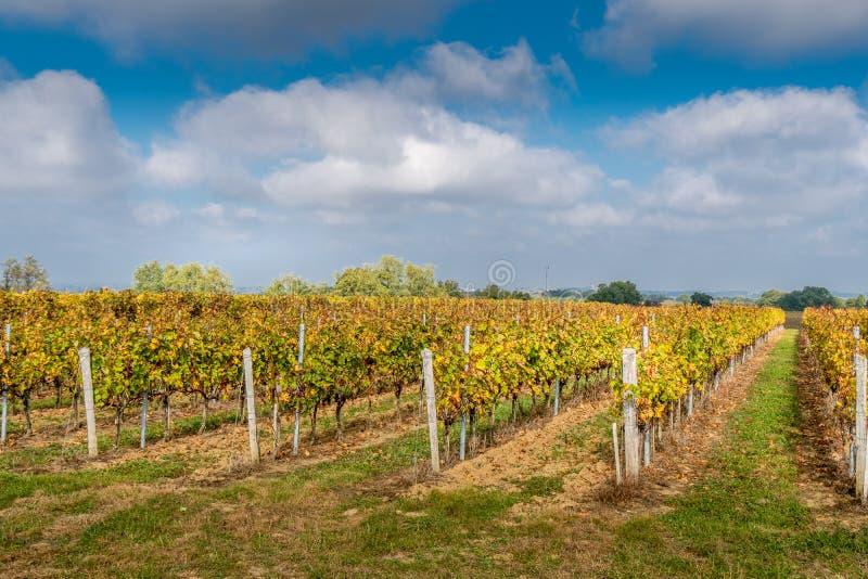 Vignobles dans la région de Medoc près du Bordeaux dans les Frances avec le gra de collines photos stock