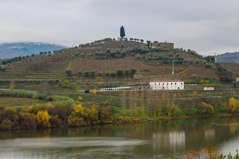 Vignobles dans la vallée de Douro images libres de droits