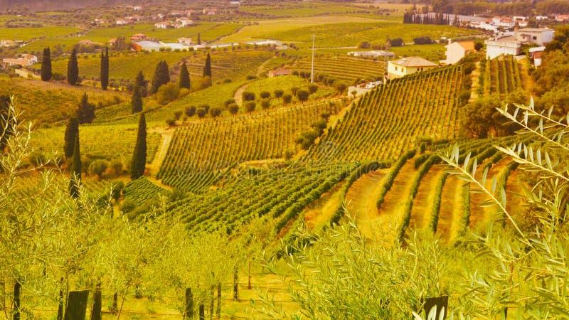 Vignobles dans le Douro River Valley entre Peso de Regua et Pinhao, Portugal images stock
