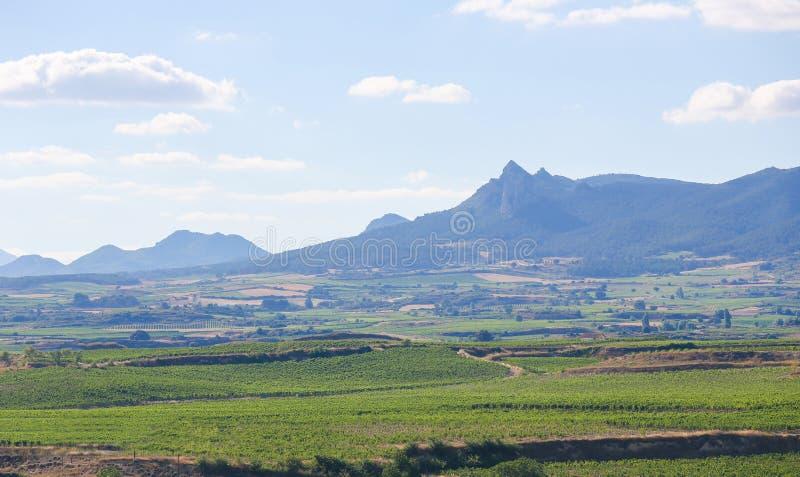 Vignobles dans le Haro, La Rioja, Espagne image stock