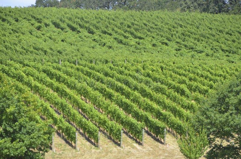 Vignobles dans le pays de vin d'Oregons image stock