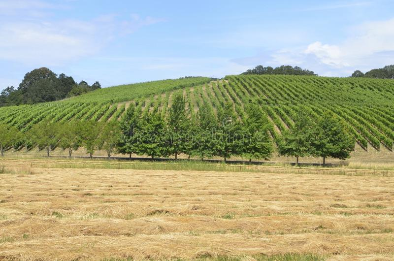Vignobles dans le pays de vin d'Oregons photo libre de droits