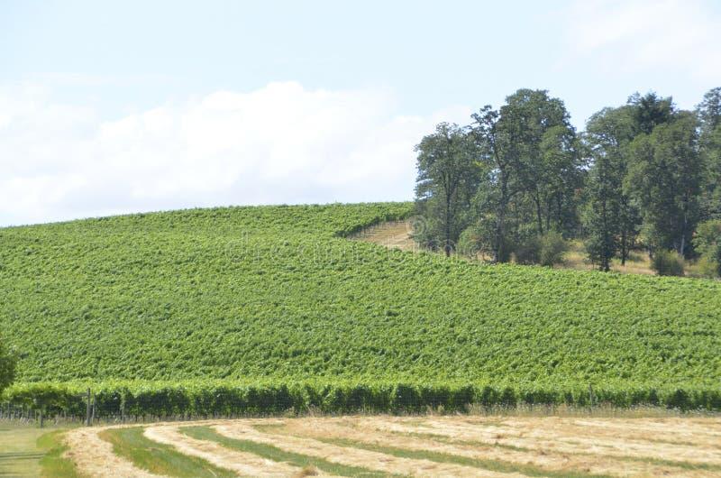 Vignobles dans le pays de vin de l'Orégon photo stock