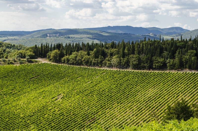 Vignobles dans le secteur du chianti photographie stock