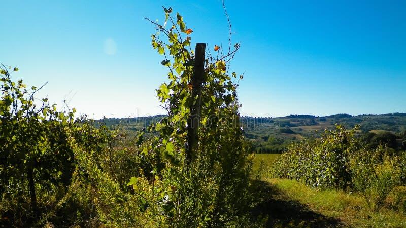 Vignobles dans les collines de la Toscane photo stock