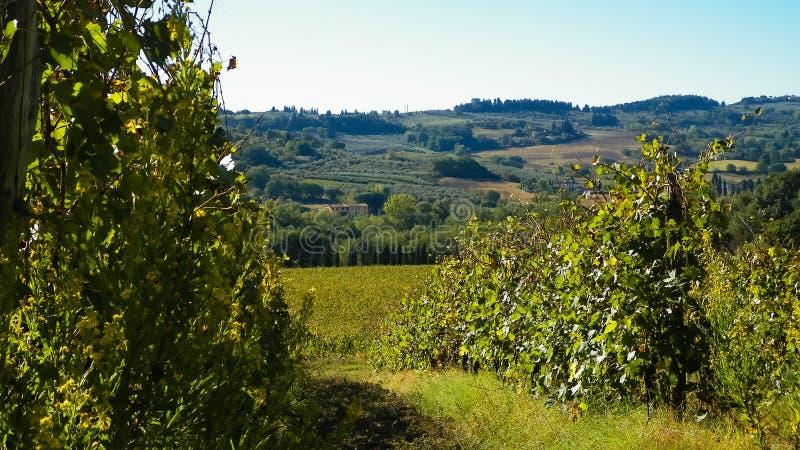 Vignobles dans les collines de la Toscane photo libre de droits
