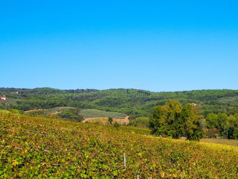 Vignobles dans les collines de la Toscane image stock