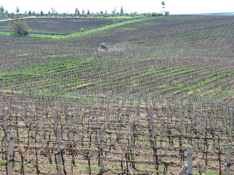 Vignobles dans Moldau, Cricova photo libre de droits