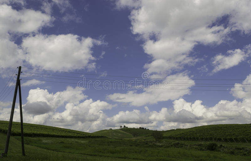 Vignobles, Daruvar, Croatie photo stock