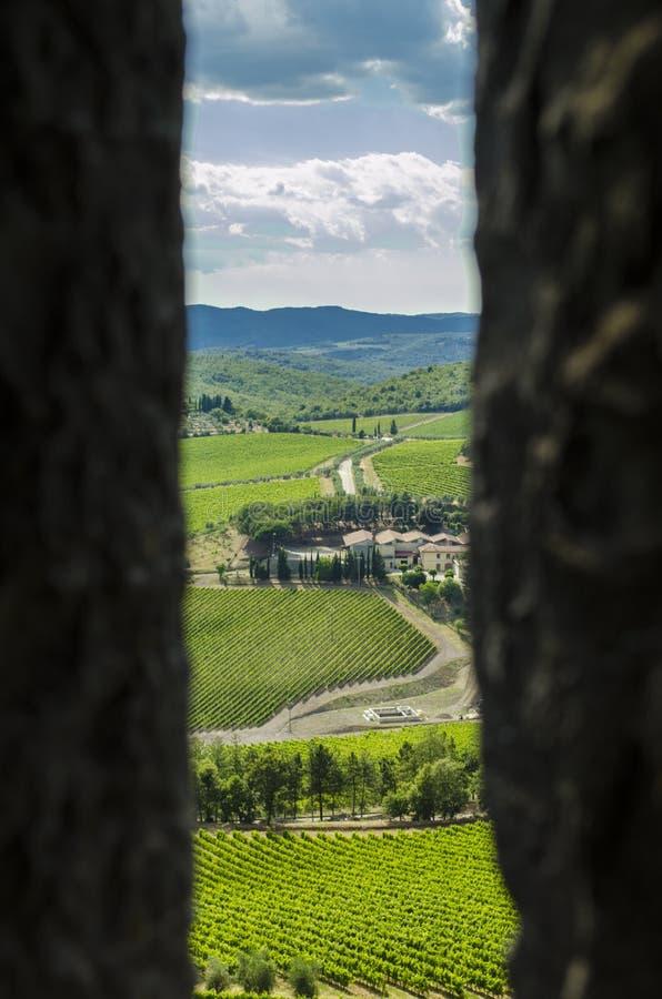 Vignobles de chianti de secteur en Toscane images libres de droits