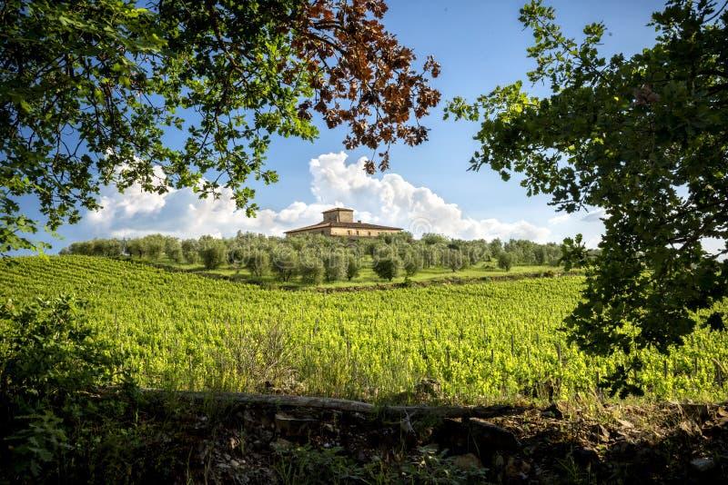 Vignobles de chianti en Toscane, Italie images libres de droits
