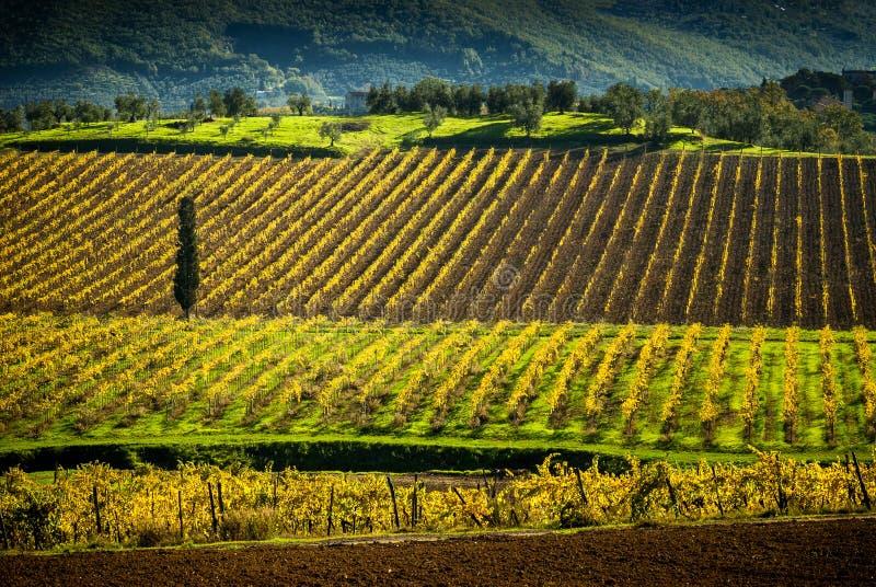 Vignobles de chianti en Toscane, Italie image stock