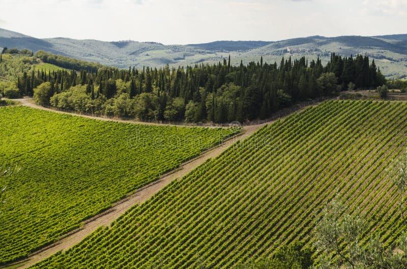 Vignobles de chianti, Italie photographie stock libre de droits